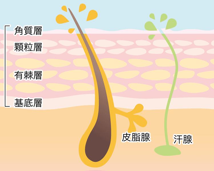 皮脂膜の作り方
